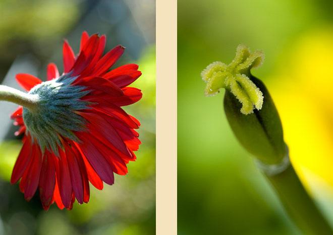 flora-09